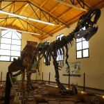 De grootste carnivore dinosaurus