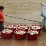 De versgevangen vis wacht op vervoer