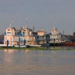 Een nestje rivierbotren in de haven van Iquitos