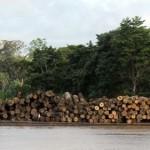 Van dik hout zaagt men planken