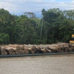 Een lading kostbaar tropisch hardhout op weg naar Pucallpa