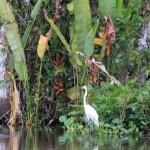 Tropische natuur