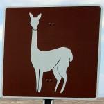 Gebied met lama's Chile